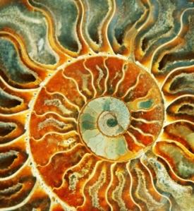 sunspiral